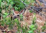 Whitetail Deer Photos