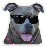 Pit Bull Sunglasses