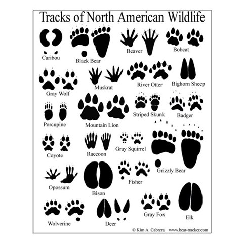 Rabbitz together with Iu Animal Tracks Guide besides 2043593 in addition Tribal Skull Tattoo Design 261833992 as well Dog Bone Clipart Border 21471. on deer prints